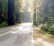 Avenue of the Giants, off of Highway 101